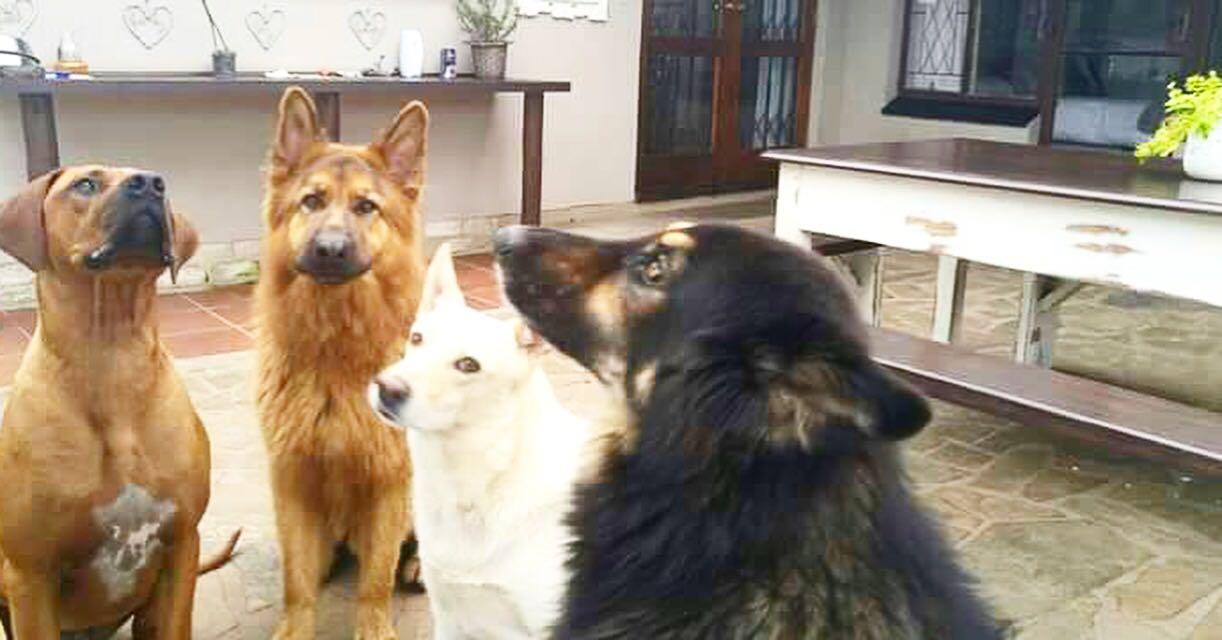 4 kind dogs