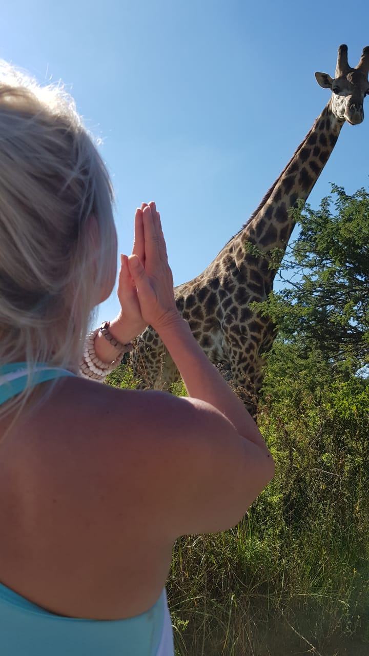 Salute a giraffe on Safari